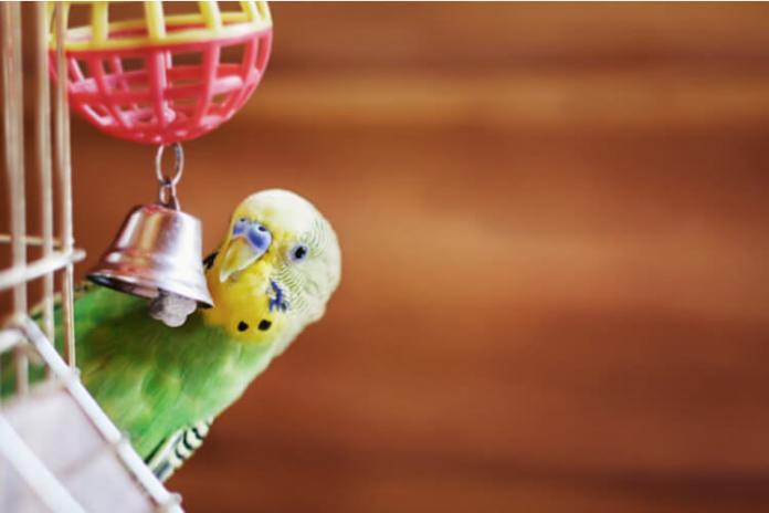 Best bird toys for cockatiels