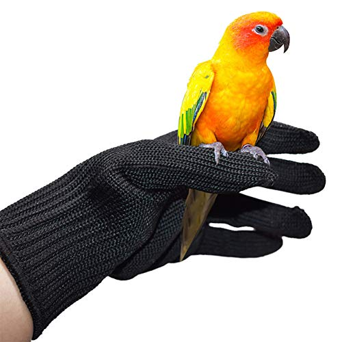 Best parrot handling gloves