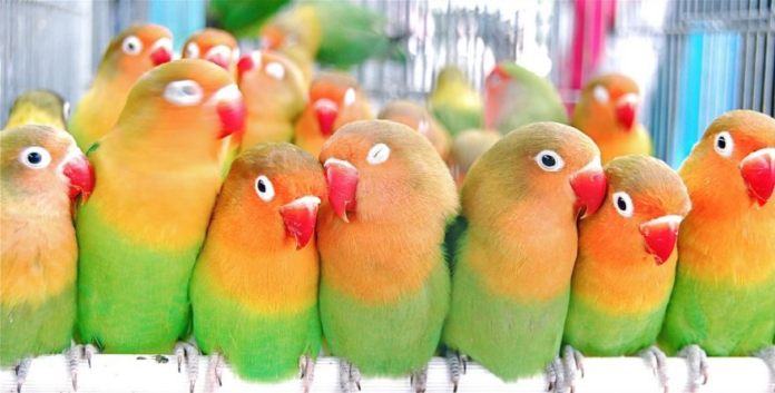 Best parrots for beginners