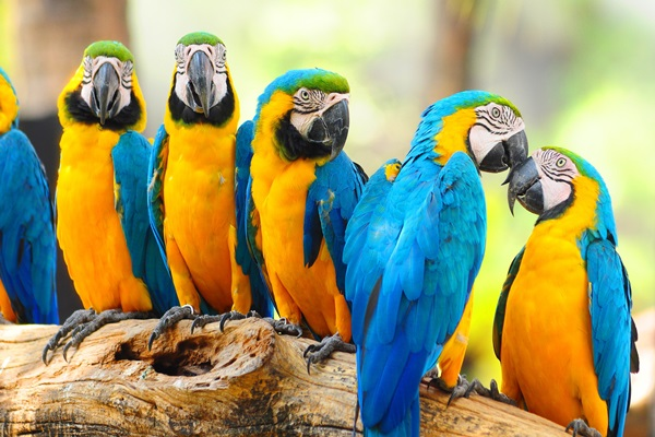 Best parrots for families