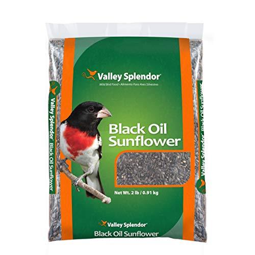 VALLEY SPLENDOR BLACK OIL SUNFLOWER REVIEW